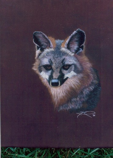 "cricketdiane - ""Fox"" - pastels on silk 16"" x 20"" from 1988"