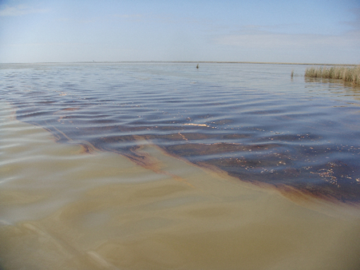 louisiana-oil-spill_100406 - This is what the EPA says is clean  water with no evidence of petroleum or crude oil or petroleum chemicals  in it according to their tests - from the Gulf of Mexico oil spill -  June 1, 2010