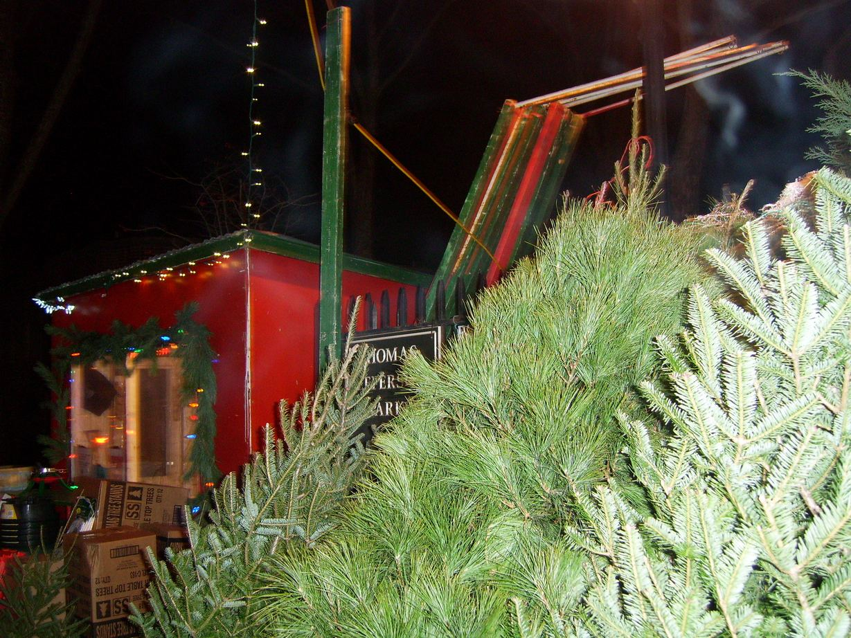 Real Christmas Trees In New York City