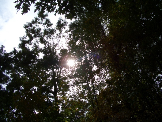 sunlight sun shining through the trees - cricketdiane 102 002
